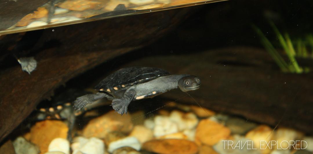 Melbourne - Aquarium Happy Little Turtle