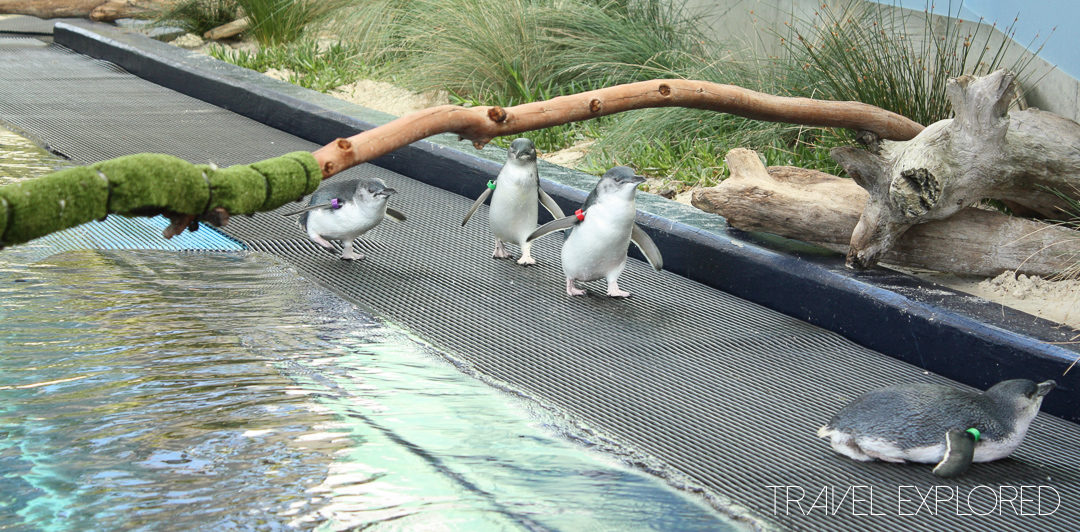 Melbourne Zoo - Penguins