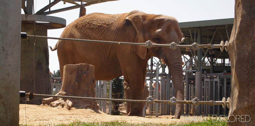 San Diego Zoo - Elephant
