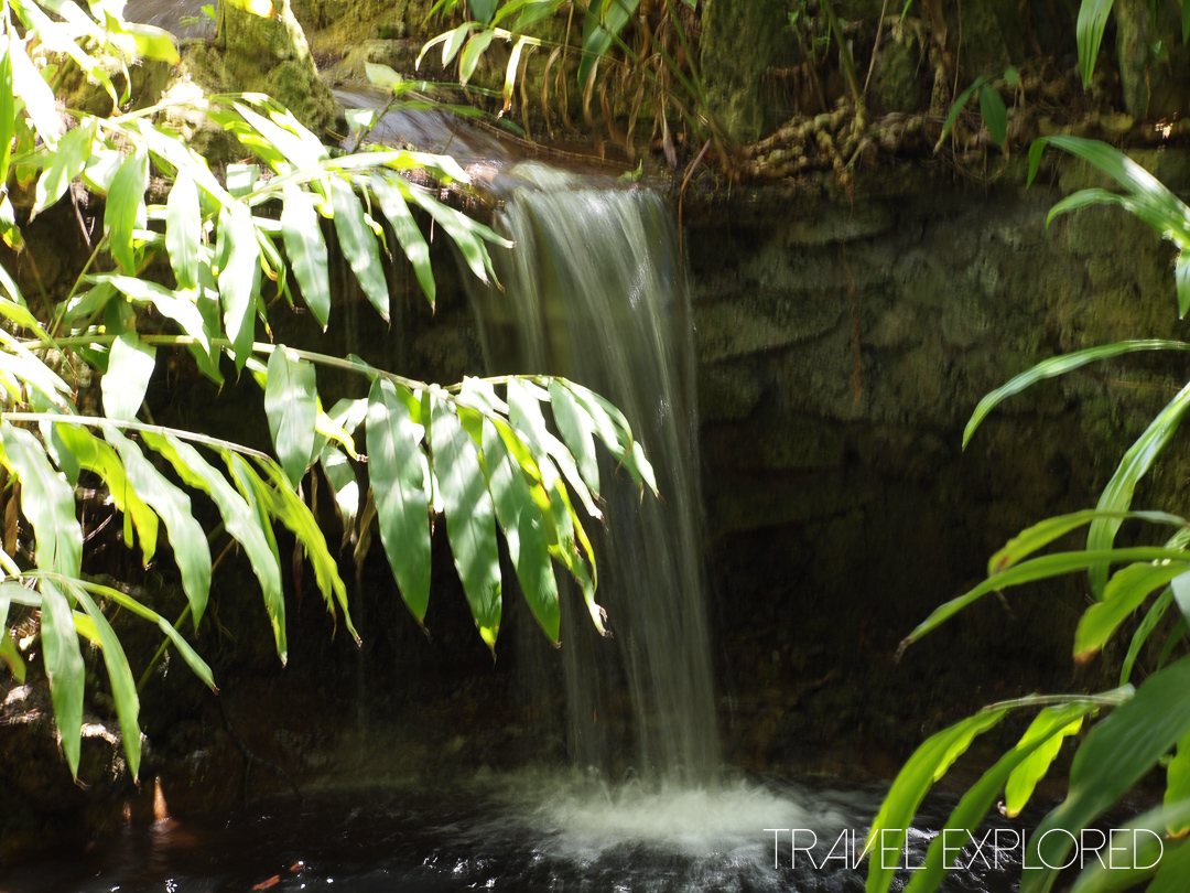 San Diego Zoo - Mini Waterfall