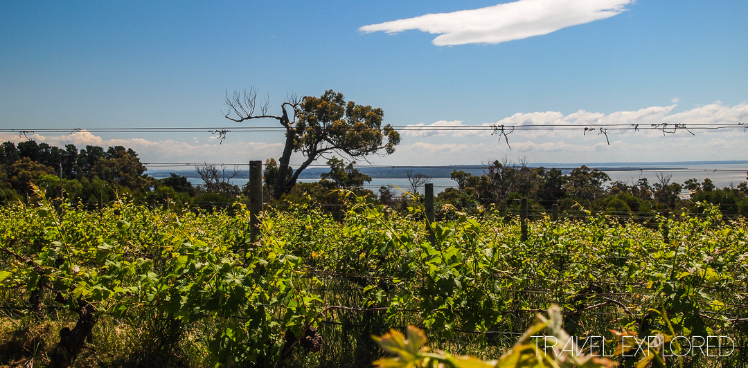 Phillip Island - Curdies Winery
