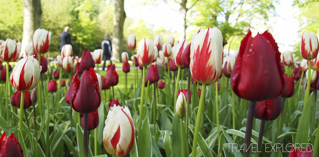 Amsterdam - Keukenhof Gardens Tulips