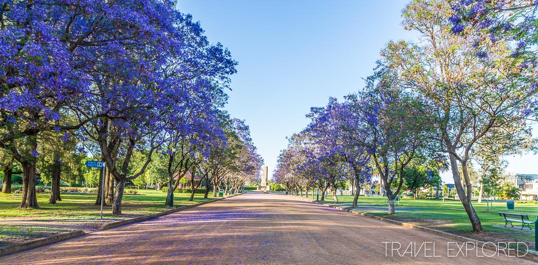 Dubbo - Jacaranda in Victoria Park